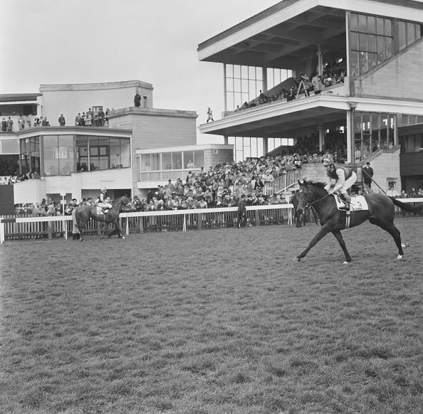 Horse「Nijinsky in action」:写真・画像(18)[壁紙.com]