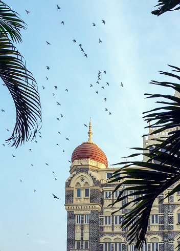 Flock Of Birds「Taj Mahal Palace Hotel, Mumbai, India」:スマホ壁紙(11)