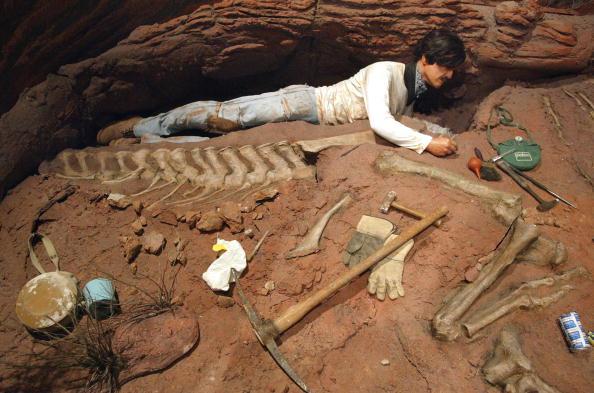 Dinosaur「Tiniest Giants: Discovering Dinosaur Eggs Exhibit」:写真・画像(5)[壁紙.com]