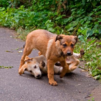 Clutch Bag「Two Puppies Playing」:スマホ壁紙(6)