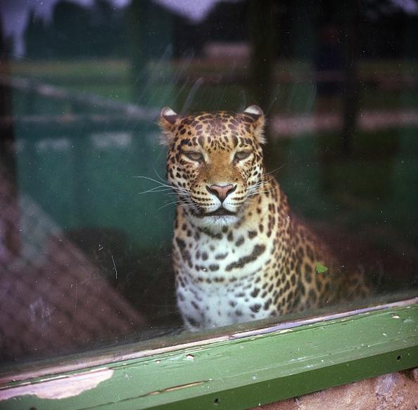 Animal「In Captivity」:写真・画像(17)[壁紙.com]