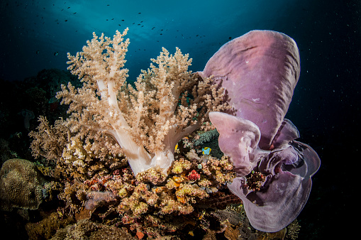 Soft Coral「The underwater world of the Philippines.」:スマホ壁紙(8)