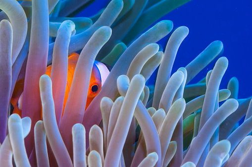 Soft Coral「The Underwater world of Philippines, Southeast Asia, western Pacific Ocean.」:スマホ壁紙(6)