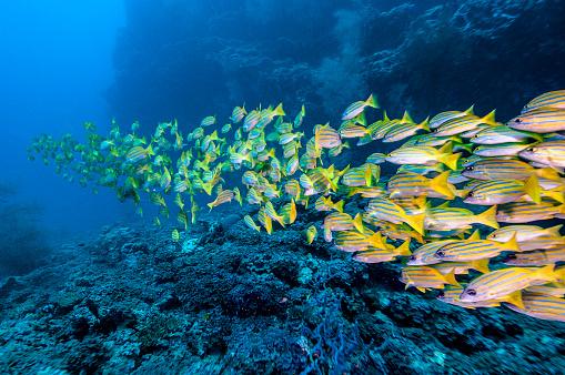 Coral - Cnidarian「The underwater world of Maldives.」:スマホ壁紙(12)