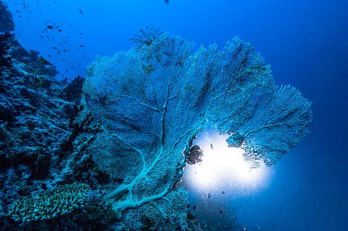 Growth「The underwater world of Maldives.」:スマホ壁紙(15)