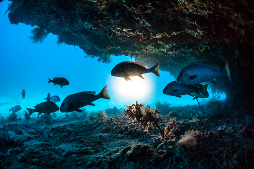 Medium Group Of Animals「The underwater world of Maldives.」:スマホ壁紙(4)