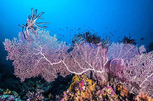 Soft Coral「The underwater world of Maldives.」:スマホ壁紙(5)