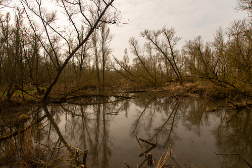 North Brabant「Damaged willows due to storm in Dutch Biesbosch National Park」:スマホ壁紙(12)