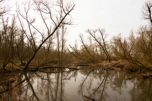 North Brabant「Damaged willows due to storm in Dutch Biesbosch National Park」:スマホ壁紙(13)