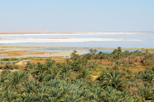 El Siwa「Date Palms and Siwa Lake」:スマホ壁紙(15)