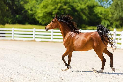 Dressage「Arabian Horse on Ranch Photo Series」:スマホ壁紙(5)