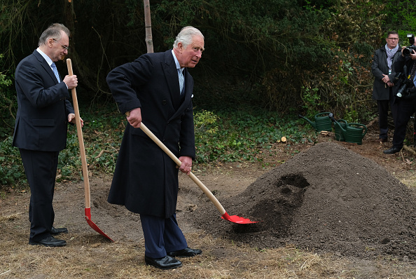 Tree「The Prince Of Wales And Duchess Of Cornwall Visit Germany - Day 2 - Leipzig」:写真・画像(14)[壁紙.com]