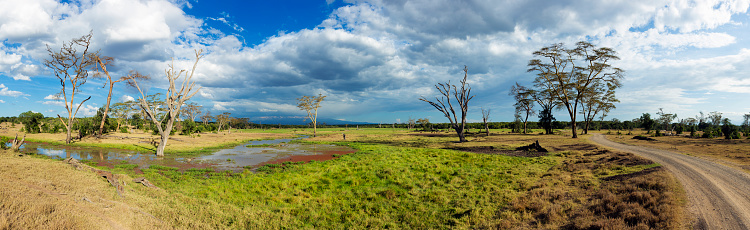 ケニア山「Panoramic view of a marsh with fever trees on the Ol Pejeta Wildlife Conservancy」:スマホ壁紙(12)