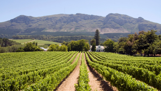 South Africa「Panoramic view of a winery in South Africa」:スマホ壁紙(8)