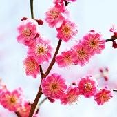 ~梅の花~:まとめ