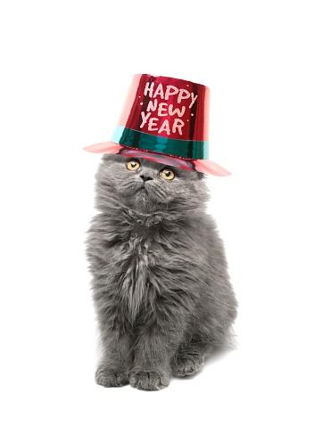 Animal Eye「happy new year」:スマホ壁紙(18)