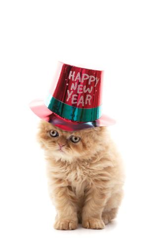Pets「happy new year」:スマホ壁紙(10)