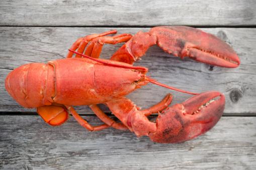 背景「USA, Massachusetts, Plymouth, Raw lobster」:スマホ壁紙(18)