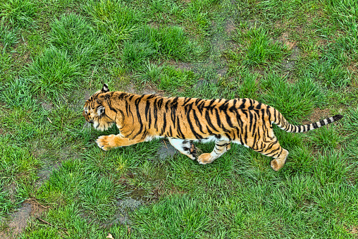 Tiger「Tiger」:スマホ壁紙(15)