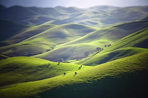 Cow「Cattle Grazing on Grassy Hills」:スマホ壁紙(7)