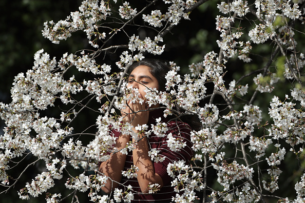 Smelling「Cherry Blossoms Begin To Bloom In Washington, DC」:写真・画像(1)[壁紙.com]