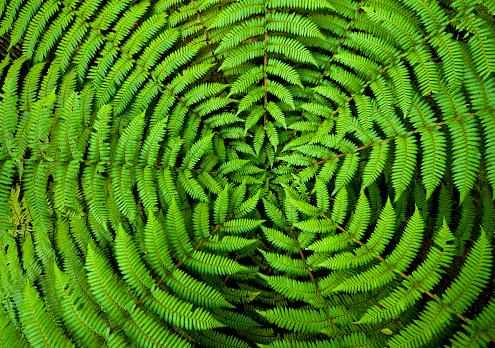Rainforest「Fern Circle Background」:スマホ壁紙(15)