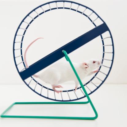 Spinning「Studio shot of white mouse in exercise wheel」:スマホ壁紙(16)