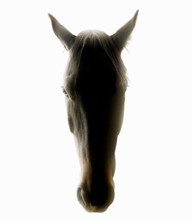 Animal Head「Studio shot of a horse on white background.」:スマホ壁紙(14)