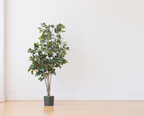 Tropical Tree「Studio shot of potted plant」:スマホ壁紙(6)