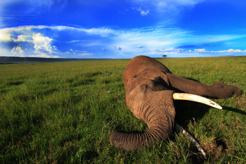 背景「Dead Elephant」:スマホ壁紙(10)