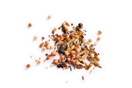 Seed「Wild Seeds」:スマホ壁紙(9)