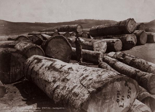Lumber Industry「Logging In New Zealand」:写真・画像(15)[壁紙.com]