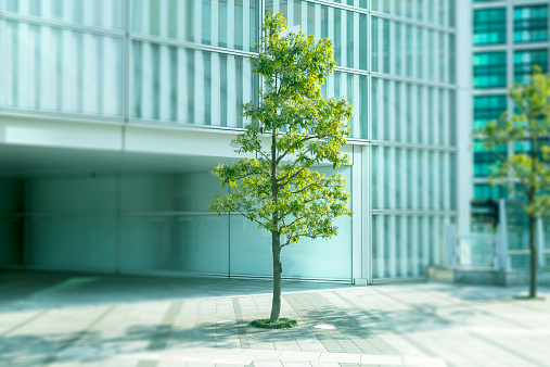 Selective Focus「a tree in the city」:スマホ壁紙(3)