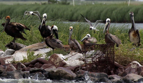 Island「Gulf Oil Spill Spreads, Damaging Economies, Nature, And Way Of Life」:写真・画像(10)[壁紙.com]