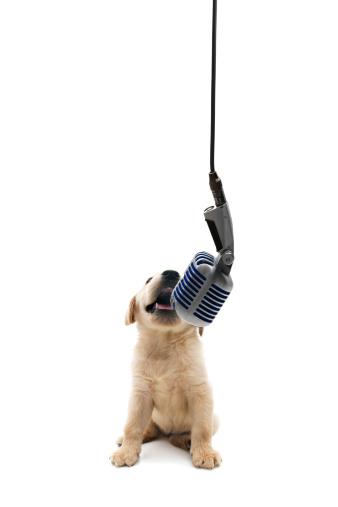 Singer「animal singer」:スマホ壁紙(11)