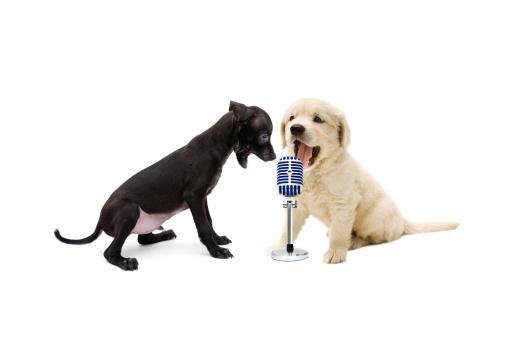 Singer「animal singers」:スマホ壁紙(4)