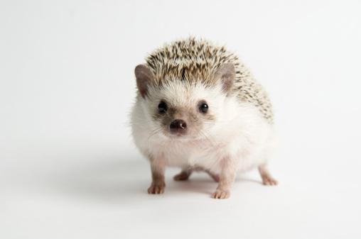 Walking「Strolling Hedgehog」:スマホ壁紙(16)