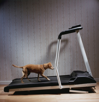 Walking「Dog Exercising on Treadmill」:スマホ壁紙(5)