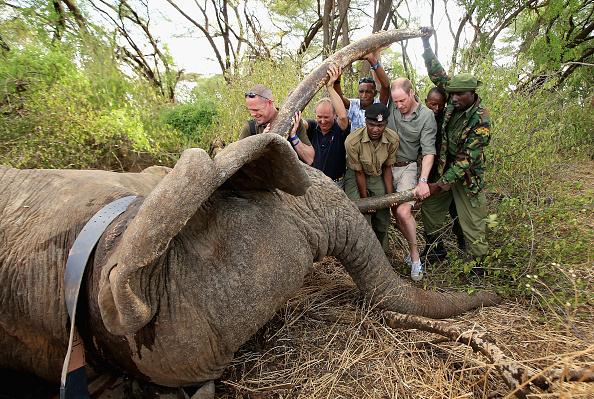 Kenya「Tusk Trust Project」:写真・画像(13)[壁紙.com]