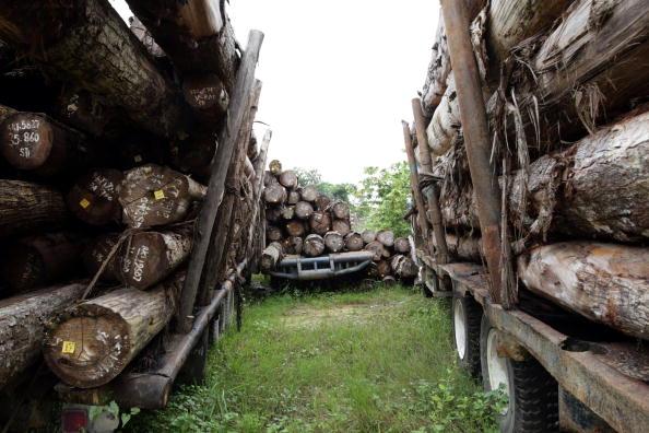 Lumber Industry「Deforestation Continues In Sumatra」:写真・画像(0)[壁紙.com]
