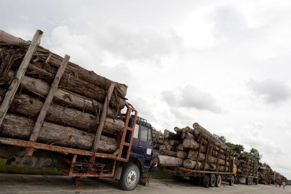 Lumber Industry「Deforestation Continues In Sumatra」:写真・画像(4)[壁紙.com]