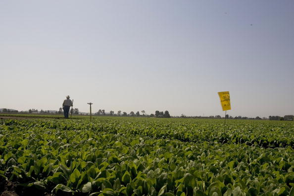Salad「Spinach Growers Tally Losses As E. Coli Investigation Continues」:写真・画像(5)[壁紙.com]