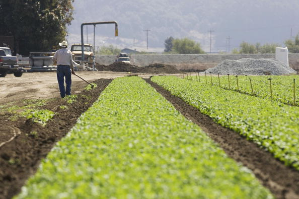 David Paul Morris「Spinach Growers Tally Losses As E. Coli Investigation Continues」:写真・画像(9)[壁紙.com]