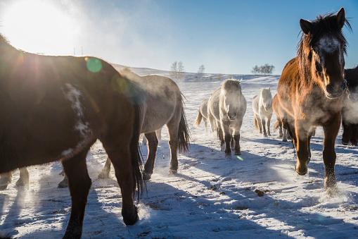 Horse「Horses Grazing in Pasture in Winter」:スマホ壁紙(12)