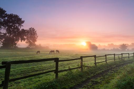 Grazing「Horses grazing the grass on a foggy morning」:スマホ壁紙(2)