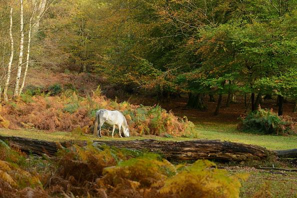 Burley - England「Autumn In The UK」:写真・画像(6)[壁紙.com]