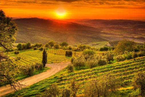 Italian Cypress「Tuscany Landscape with Vineyards at Sunset, Chianti Region, Val d'Orcia」:スマホ壁紙(10)