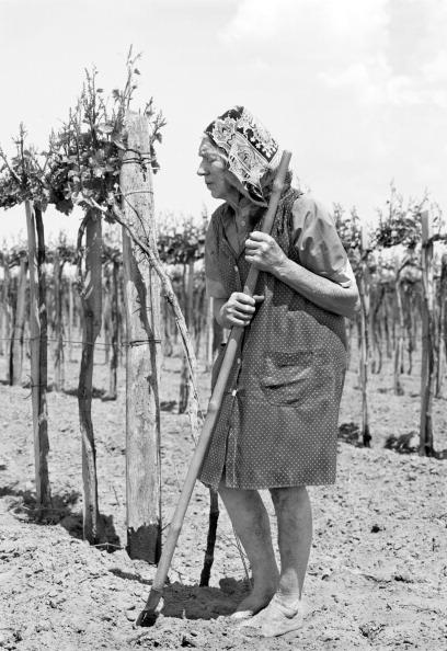 Tom Stoddart Archive「European Agriculture」:写真・画像(11)[壁紙.com]