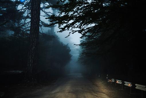 Rain「Road in forest」:スマホ壁紙(14)