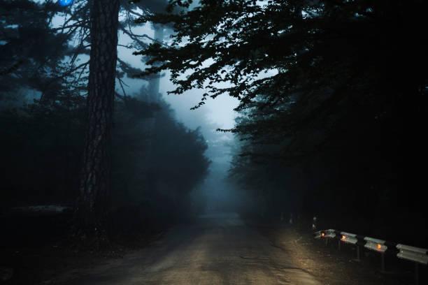 Road in forest:スマホ壁紙(壁紙.com)